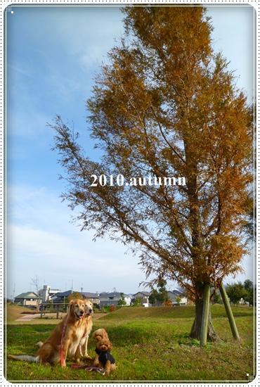 2010,11,25お散歩5