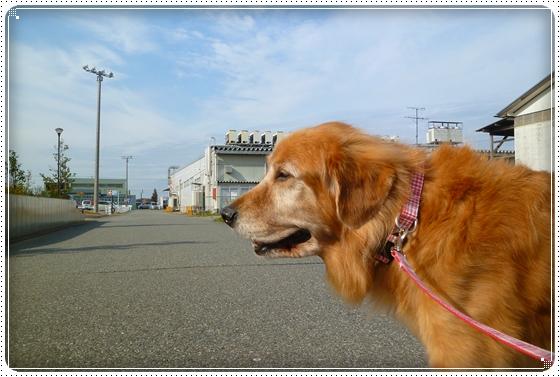 2010,11,25お散歩3
