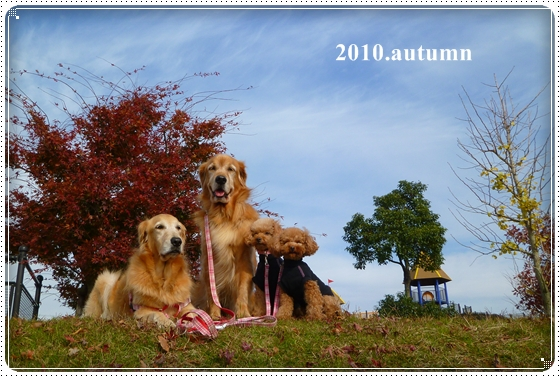 2010,11,25お散歩7