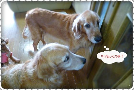 2010,11,27お散歩3