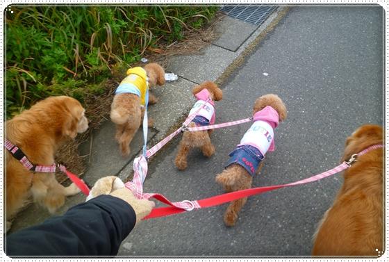 2010,11,27お散歩7