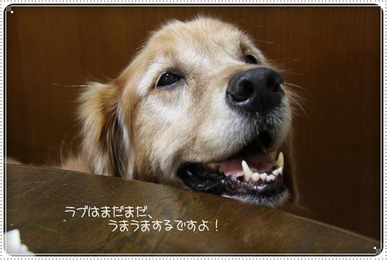 2010,12,1お散歩9