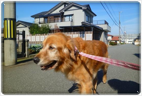 2010,12,2お散歩1