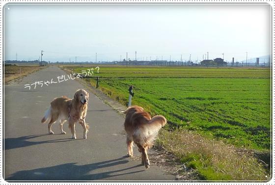 2010,12,2お散歩8