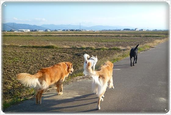 2010,12,2お散歩7