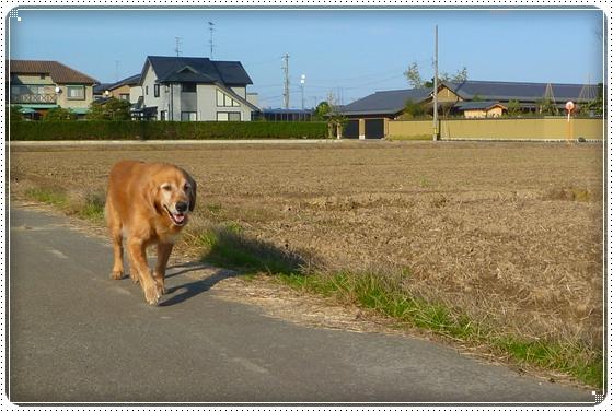 2010,12,2お散歩13