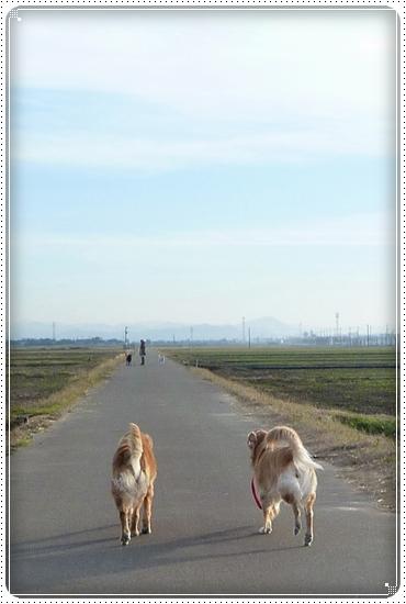 2010,12,6お散歩5