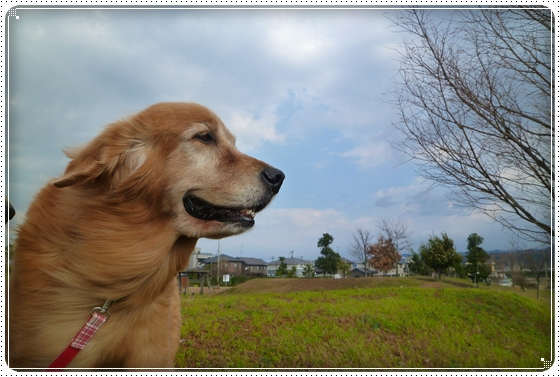 2010,12,10お散歩7