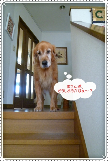 2010,12,10お散歩4