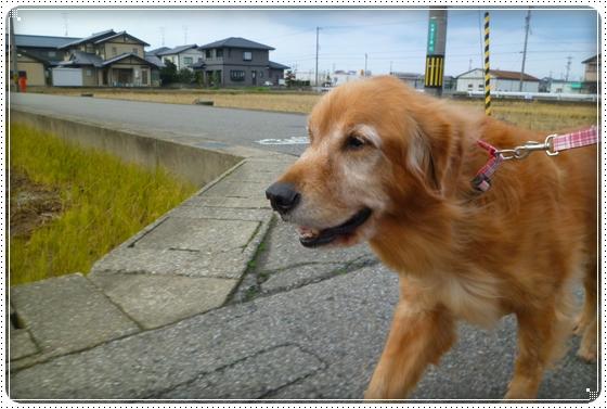 2010,12,10お散歩5