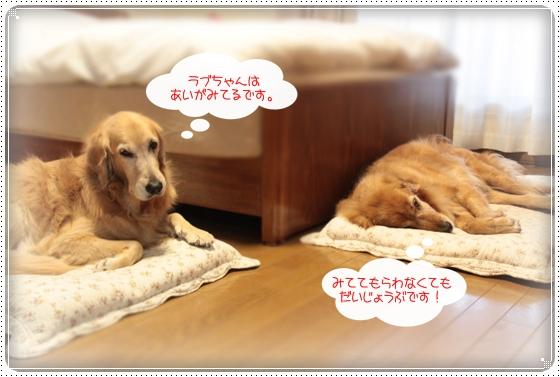 2010,12,10お散歩3