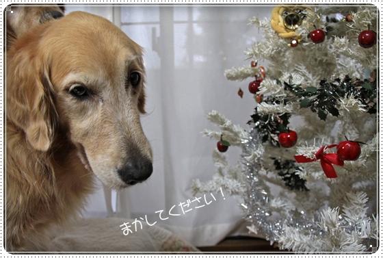 2010,12,10お散歩11