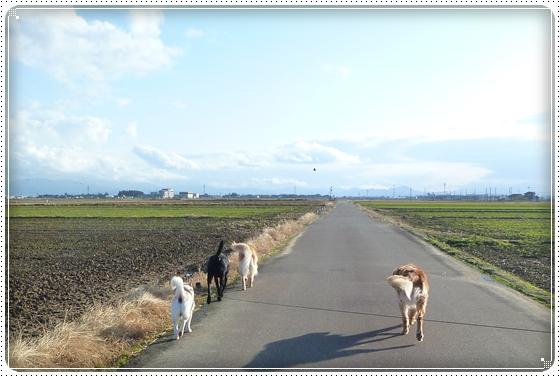 2010,12,14お散歩5