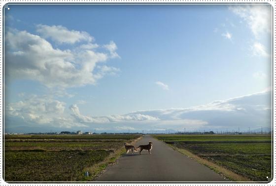 2010,12,14お散歩4