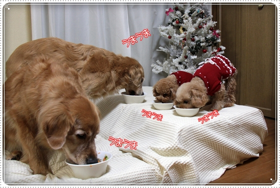 2010,12,24クリスマス5