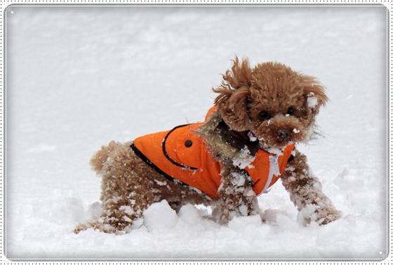 2010,12,27雪遊び6