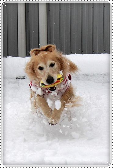 2010,12,27雪遊び3