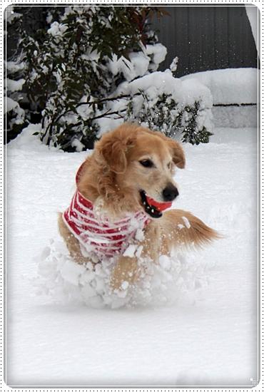 2010,12,27雪遊び2