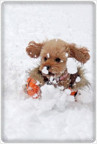 2010,12,27雪遊び4