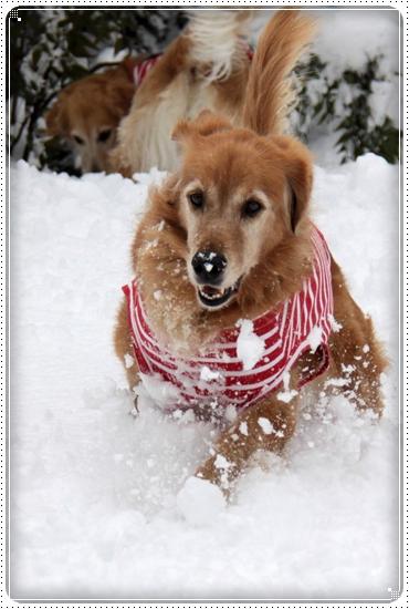 2010,12,27雪遊び7