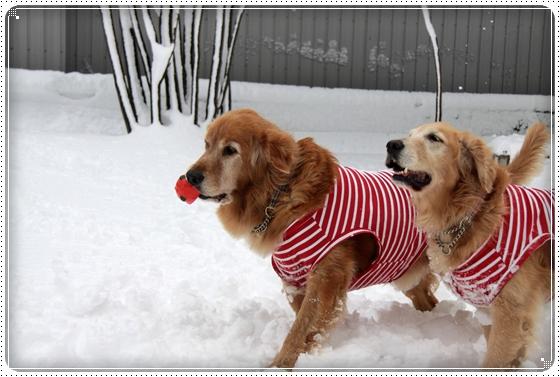 2010,12,27雪遊び8