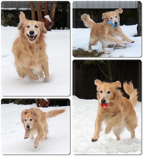 2011,1,2雪遊び4