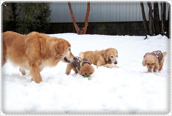 2011,1,2雪遊び3