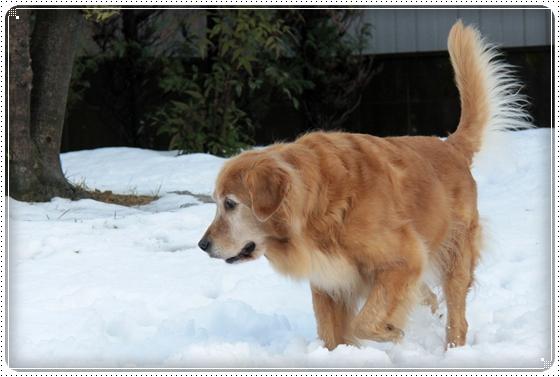 2011,1,2雪遊び10