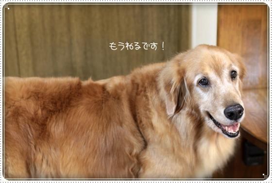 2011,1,5お散歩6