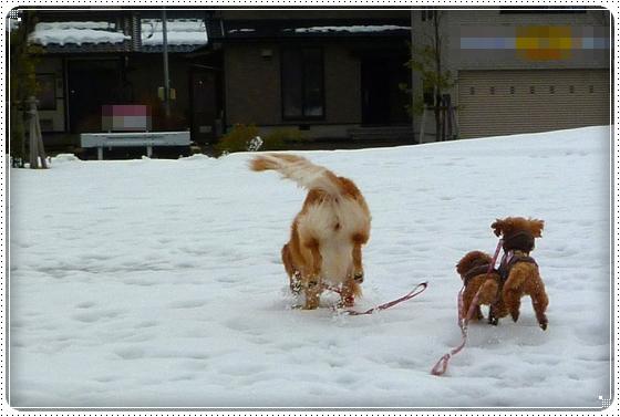 2011,1,5お散歩2