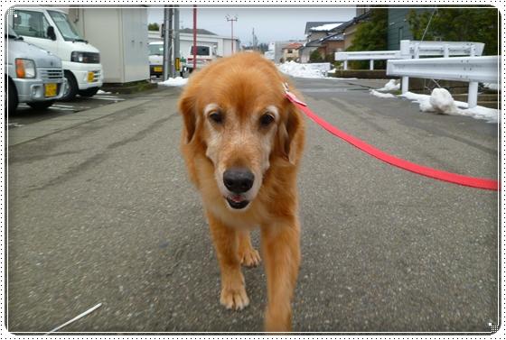 2011,1,5お散歩1