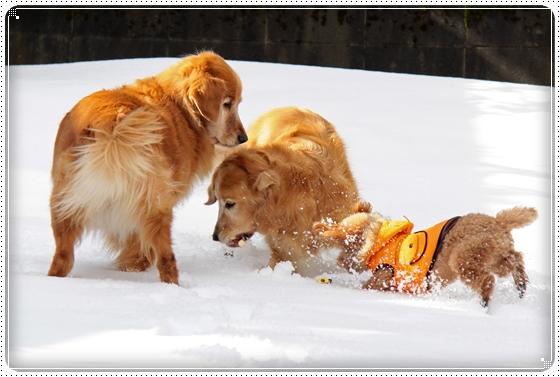 2011,1,18雪遊び4