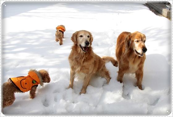 2011,1,18雪遊び3