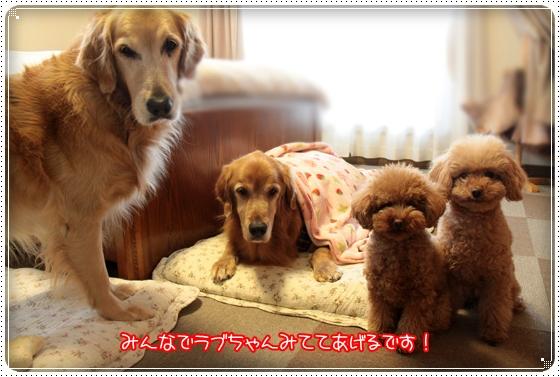 2011,1,29ラブ6