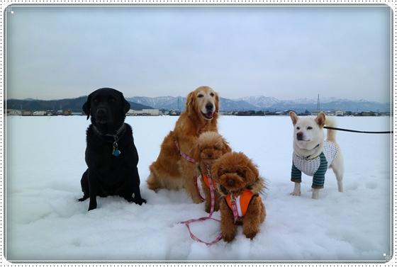 2011,2,9お散歩5