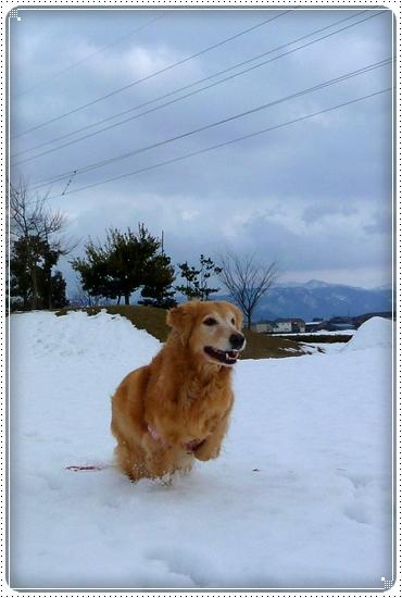 2011,2,10お散歩2