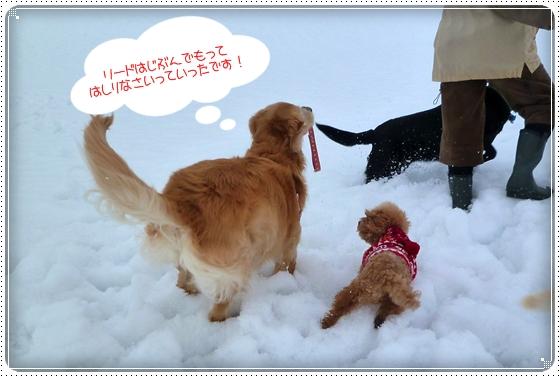 2011,2,10お散歩8