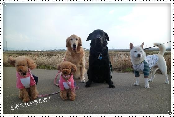 2011,2,18お散歩4