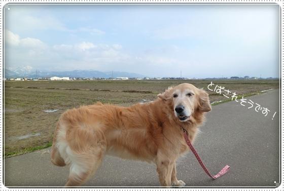 2011,2,18お散歩2