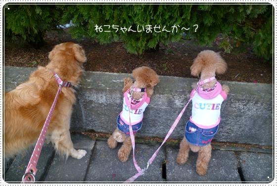 2011,2,18お散歩7