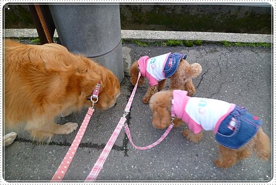 2011,2,18お散歩6