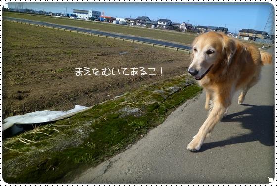 2011,2,19お散歩4
