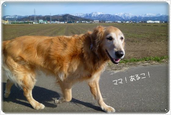 2011,2,19お散歩3