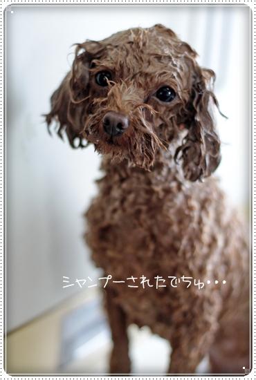 2011,2,27ベビーちゃん2