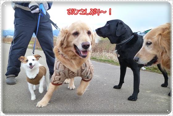 2011,3,3お散歩2