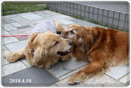 2011,3,3お散歩10
