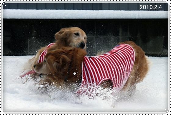 2011,3,5雪遊び12