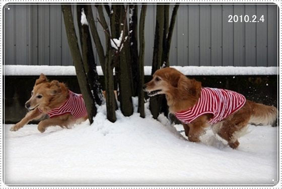 2011,3,5雪遊び11