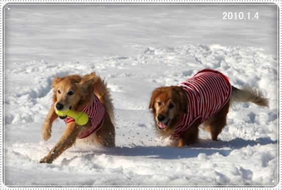 2011,3,5雪遊び10