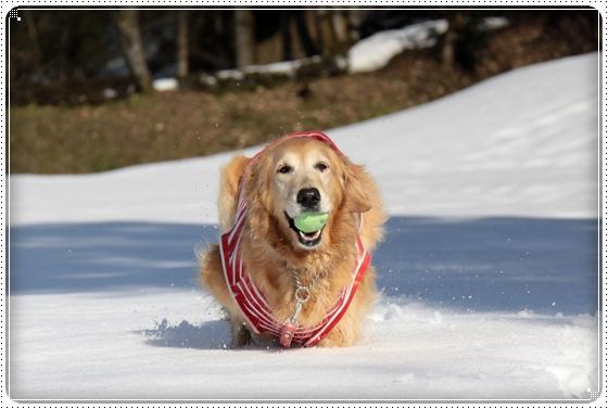 2011,3,5雪遊び14